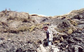 Tony Gill preparing to dig and collecting ammonites and crinoids, these will be sold at the Charmouth Fossil shop.